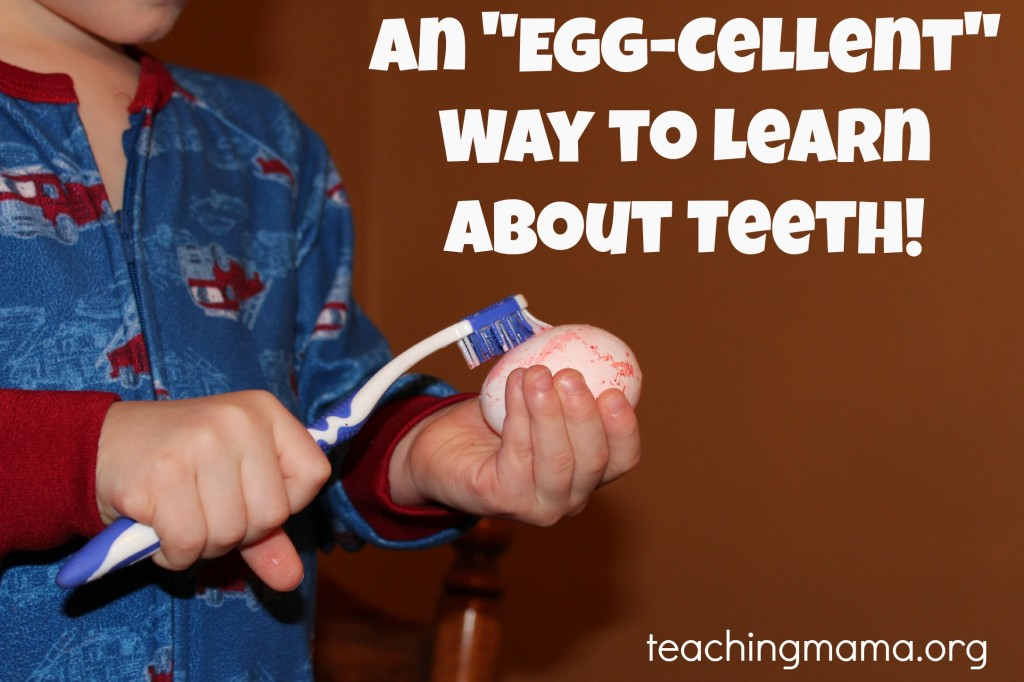 """An """"Egg-Cellent"""" way to Learn About Teeth"""
