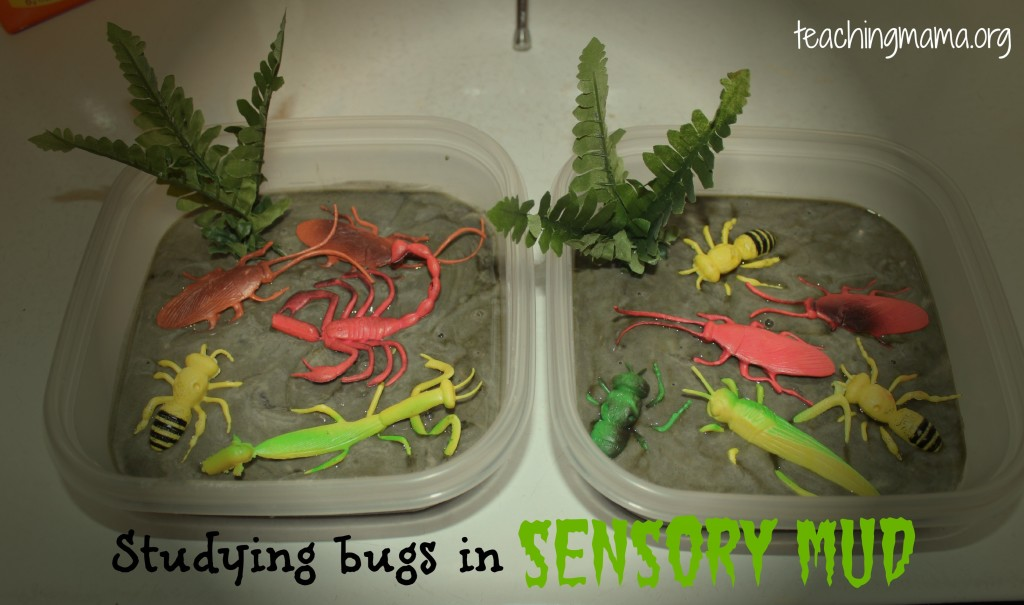 Studying Bugs with Sensory Mud