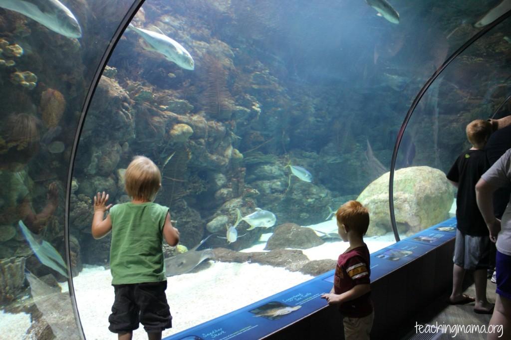 Aquarium at the Omaha Zoo