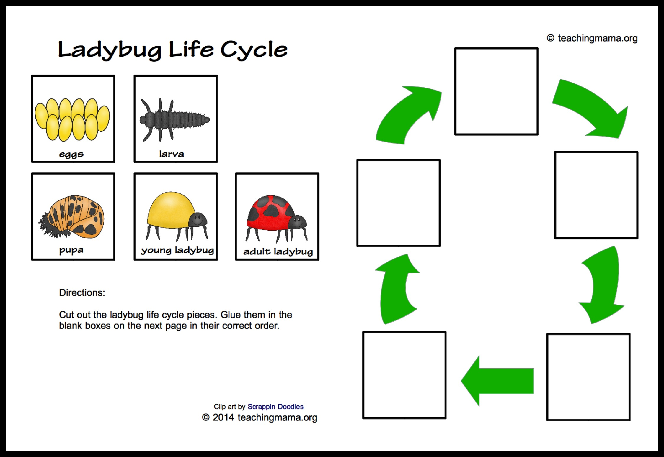 Cp Xzoce furthermore B D B Fe Fbc Bdeca Ec Fb as well Lifecyclecollage X also Insect Bfirst Bletter Bsound Bclip Bcards Bfree Blabel also Printable Bug Pin. on ladybug life cycle printables 2