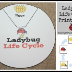 Ladybug Life Cycle Activities & Printables