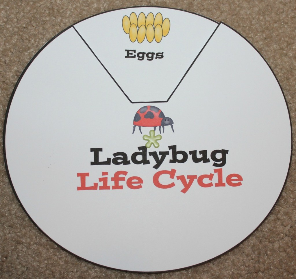 ladybug life cycle printables u0026 activities