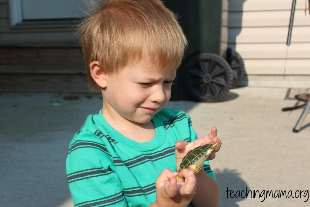 Exploring Turtles