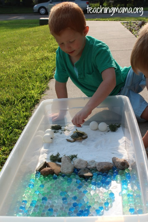 Exploring the Turtle Sensory Bin