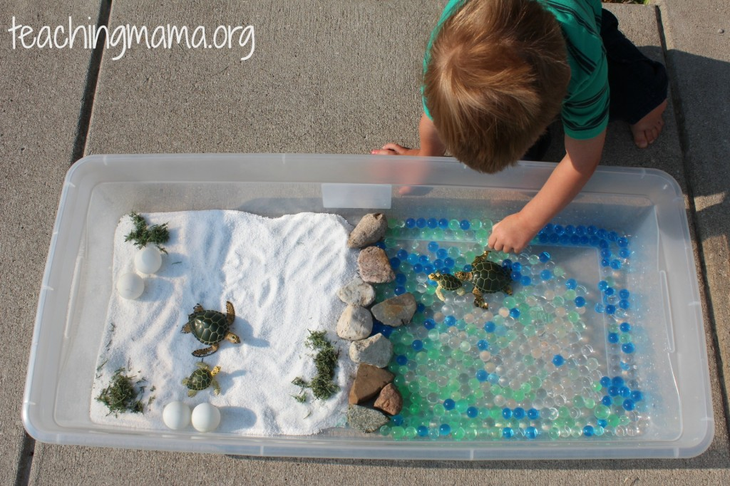 Invitation to Play with Turtle Sensory Bin