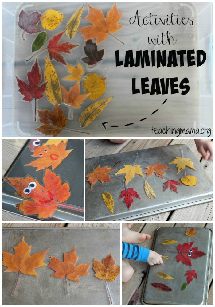 Activities with Laminated Leaves - Pin
