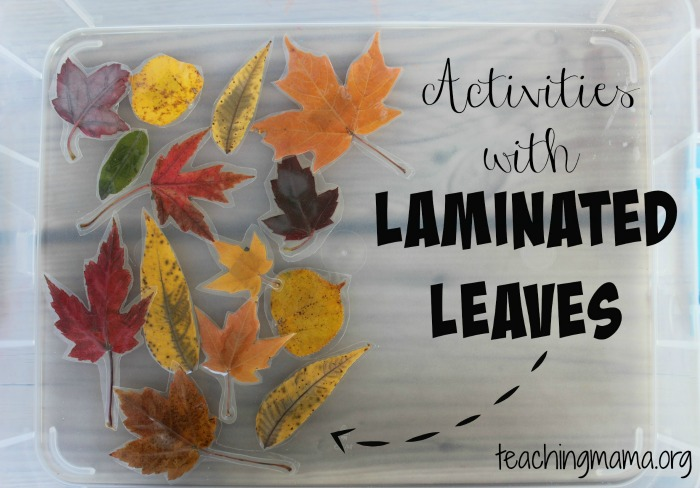 Activities with Laminated Leaves