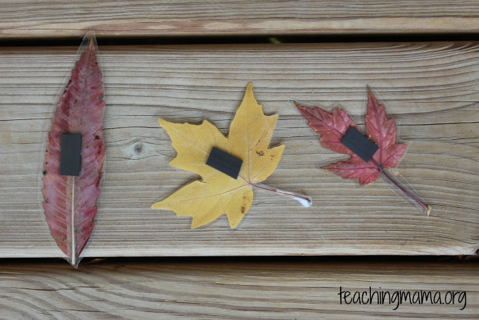 Leaves with magnets