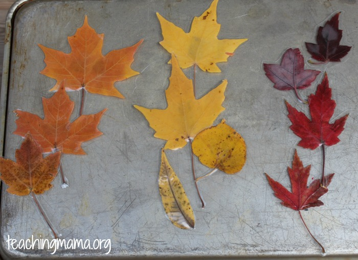 Color Sorting with Leaves