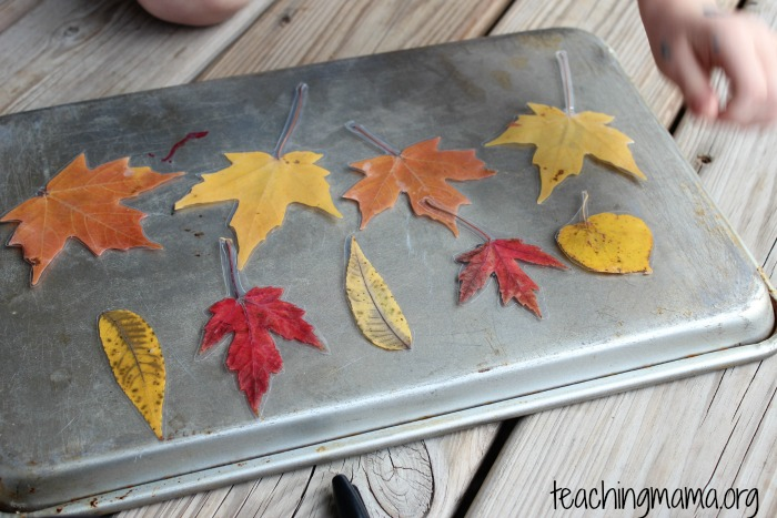 patterns with laminated leaves