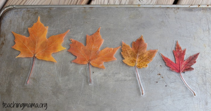Sizes of Leaves