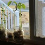 Germination Activity – Grow Seeds in a Jar!