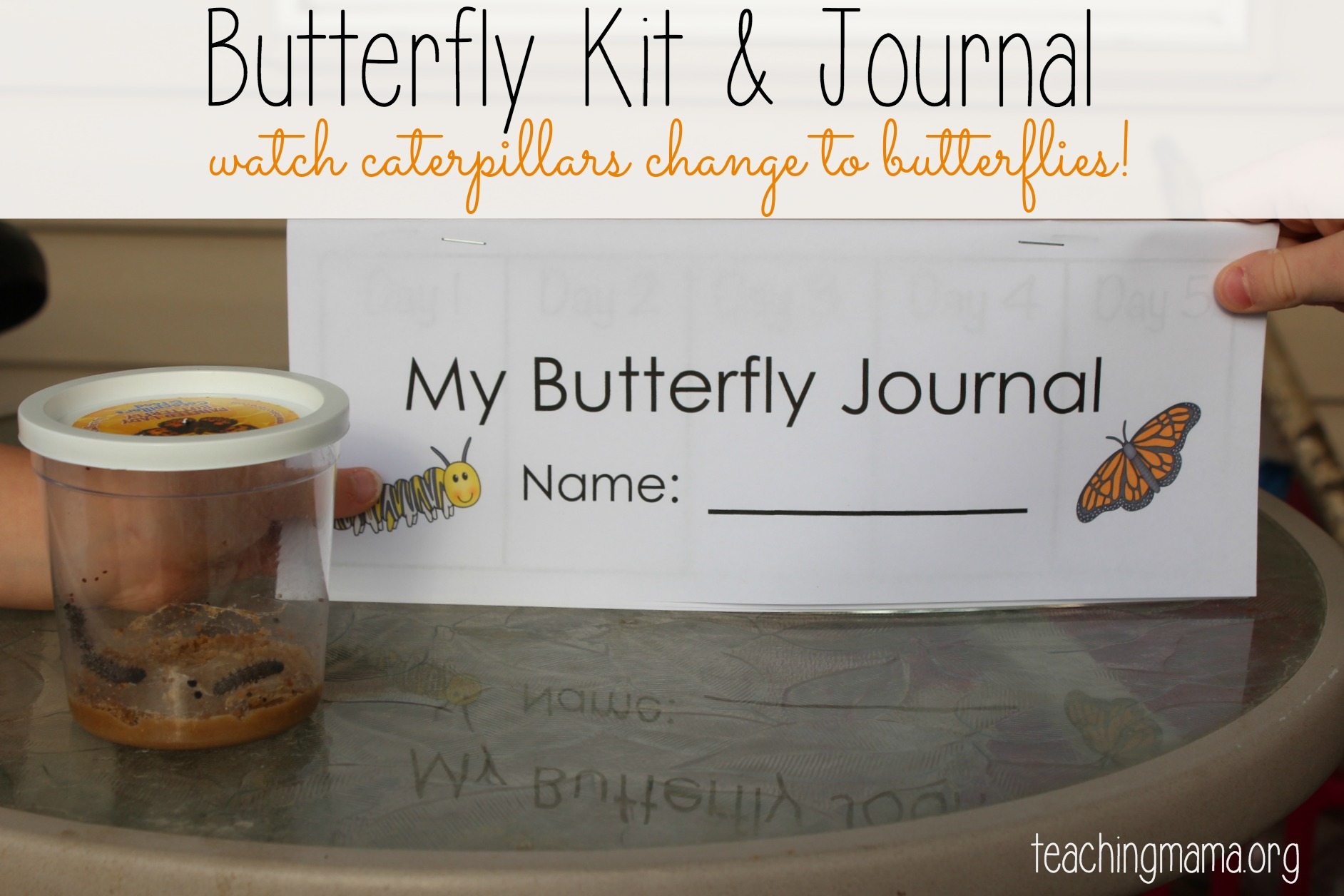 Butterfly Life Cycle Kit Journal
