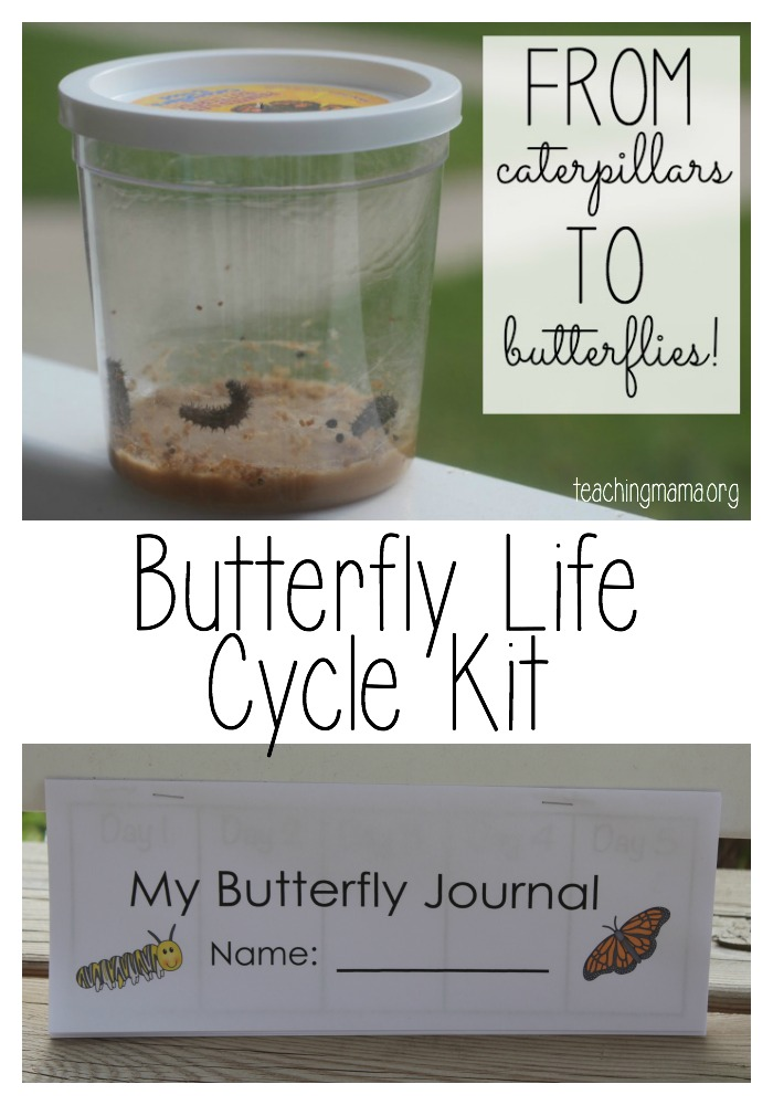 Butterfly Life Cycle kit