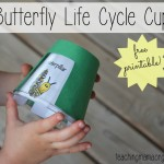 Butterfly Life Cycle Cup