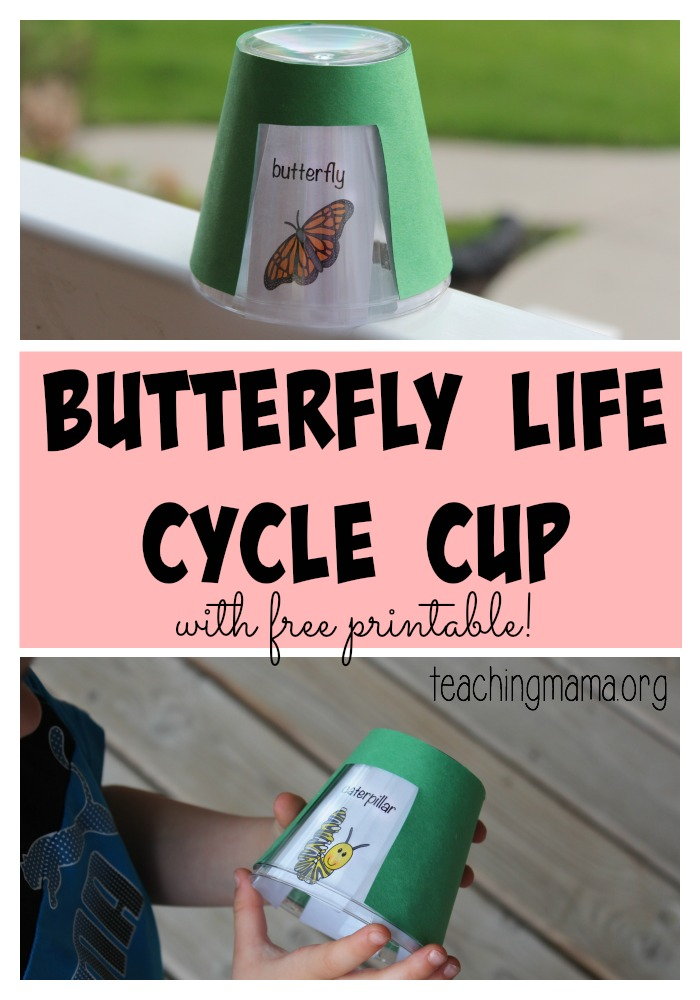 Butterfly Life Cycle Cup- Pinterest