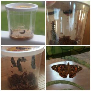 Friday Favorites – We Have Butterflies!