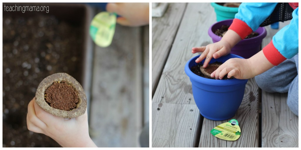 planting seed pods