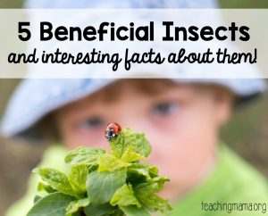 5 Beneficial Insects Facts