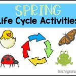Spring Life Cycle Activities