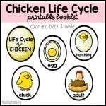 Chicken Life Cycle Printable