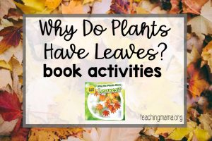 Why Do Plants Have Leaves?
