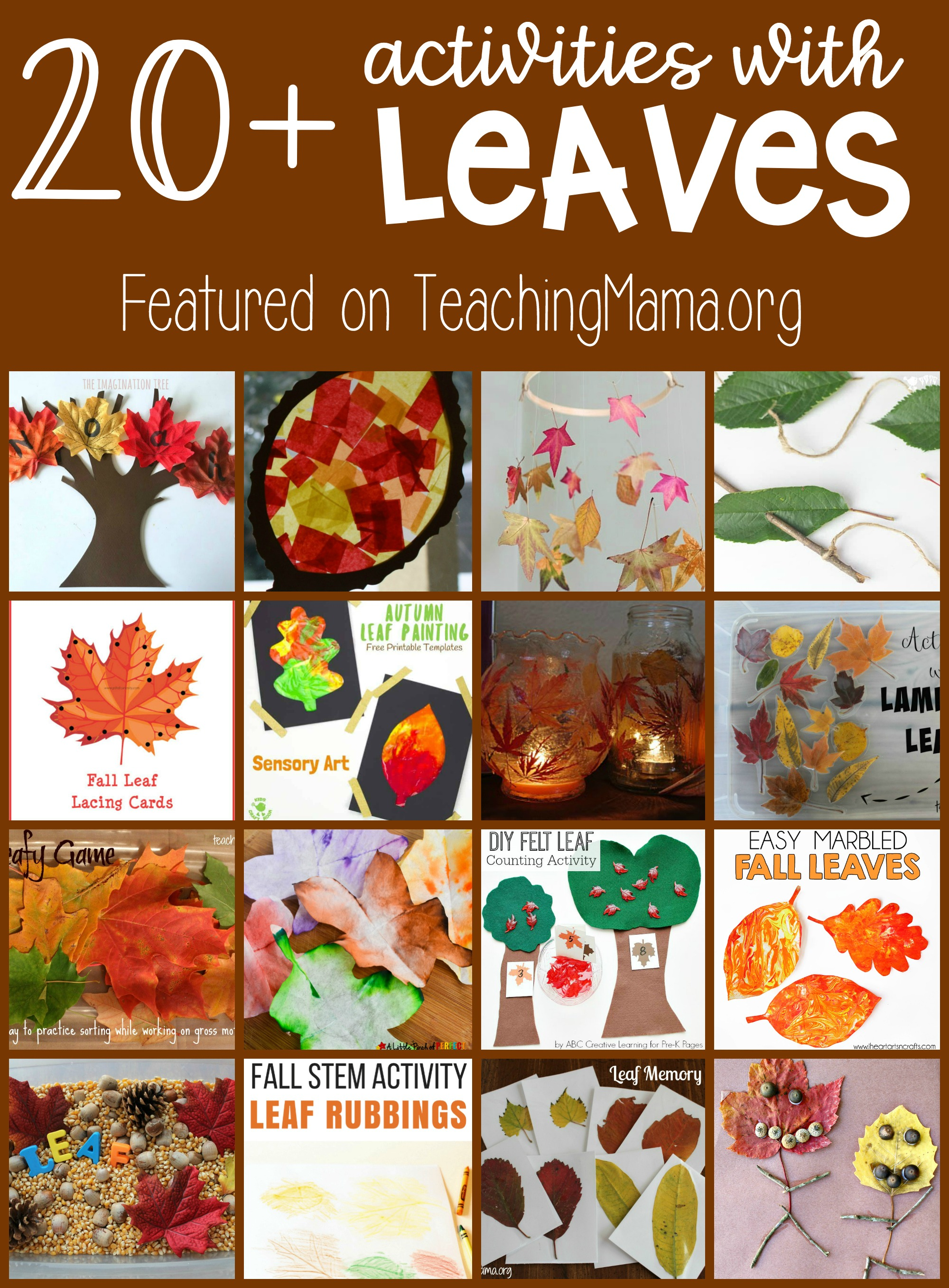 20 Activities With Leaves